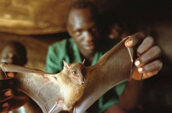 Origem do Vírus Ebola